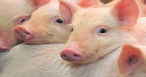 """供给侧改革之《猪肉如何""""涅��重生""""》"""