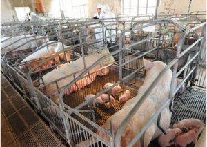 科学的猪场生物安全体系