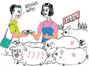 """养殖业保险如何更好为农户""""御寒"""""""