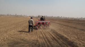 玉米播种已陆续开展 主体走势预期产分歧