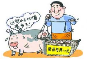 重庆南川仔猪价格再涨 创十年来新高