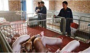 猪场生产的计划管理