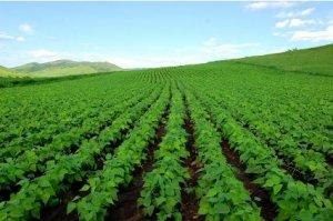 农业部:大豆将扩种至1.4亿亩 近期不发展转基因