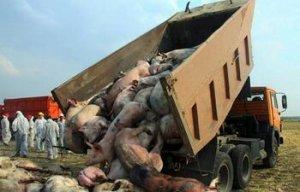肯尼亚中部省1家农场发生非洲猪瘟