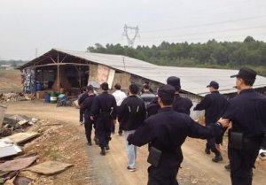 浙江6月底前将关停剩余15家养殖场 开展生猪散养户整治