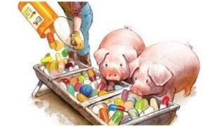 新欧盟抗生素立法使生猪与生产商面临风险
