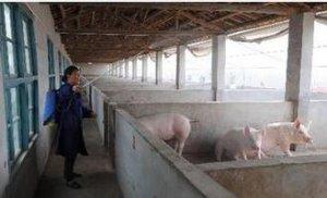 你的猪场消毒工作是否避开了这些雷区