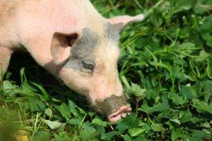 湖南:昌隆绿博联手打造种养业生态示范园