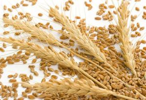 印尼饲料加工商将转用小麦