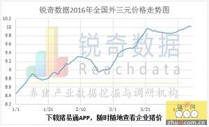 2016年4月18日猪评:整体趋稳 规模场价格优势明显
