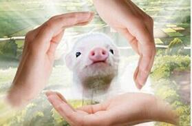 英国政府改变了关于新动物福利法规的决定