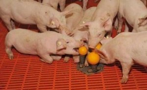 法国把动物福利放在农业战略的核心地位