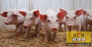 生猪存栏增加只是片面而已 实质上是减少的