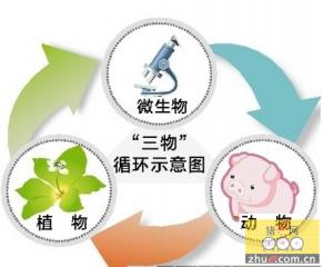 """广西农业形势渐暖 """"微生物+""""生态养殖模式迅速推广"""