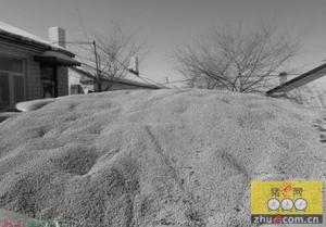 玉米库存成本每年630亿实行价补分离