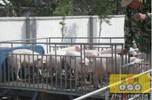 补充猪场的后备力量怎么抉择
