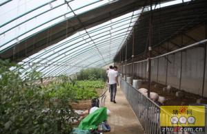 四川:江阳区打造畜牧养殖示范标杆