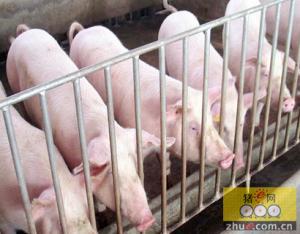 4月中旬江苏无锡生猪出栏均价10.25元  环比下跌0.49%