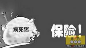 浙江桐乡率先启动生猪保险与无害化处理联动工作