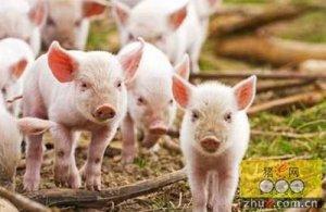 浙江衢州市开展生猪养殖整规专项行动