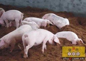 江西新干先发酵床养猪环保又经济