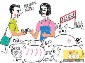 四川试点育肥猪价格指数保险取得显著成效