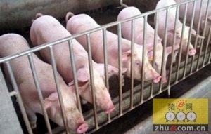 5月后生猪出栏量或将出现下降