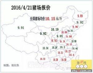 【行情】毛猪涨势延续,豆粕价格大涨,恐影响饲料价格