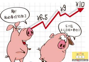 江苏连云港生猪价格飚升至每斤十元