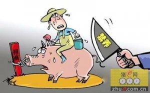 上海江海:今年关闭畜禽禁养区内养殖场