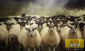 两群羊的选择,此生必读之文