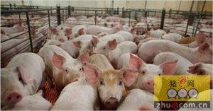 """农业部发布生猪生产""""十三五""""规划 促进"""