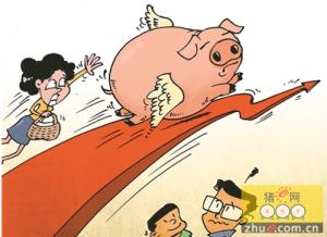 江西吉安:生猪价往上飙 创近四年新高