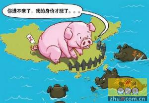 """猪价""""无惧""""储备肉投放再创新高 将突破20元/公斤大关"""