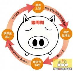 """限制进口保护不了养猪户,得打破""""猪价周期"""""""