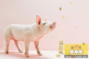 """猪周期怪圈 30年老养猪户称""""没弄懂猪价"""""""