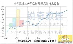 锐奇数据16年16周猪评:东北华南两个驱动拉升全国猪价