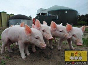 生猪生产发展规划发布 农业部推多举措熨平猪周期