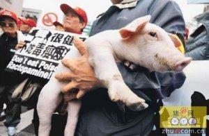 民进党拟开放瘦肉精美猪换台湾加入TPP