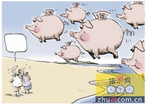 """风口下也有飞不高的""""猪"""":养殖企业能否盈利"""