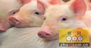 Seaboard Foods推迟了堪萨斯养猪项目