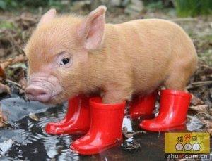猪兽药市场现状分析及兽药企业今后发展