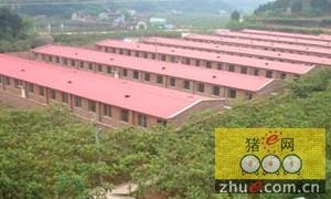 政府:猪场不得扰民!在中国养头猪咋就这么难?