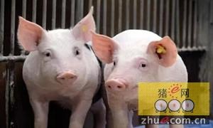 CME:生猪现货市场呈现横向变化趋势 猪肉零售价格低于去年同期