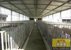 湖南江华扩建生猪养殖基地