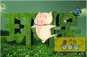 安徽肥西县畜牧业绿色转型迎来发展新机遇