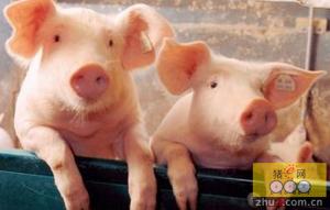 第17周猪源市场供应依旧紧缺