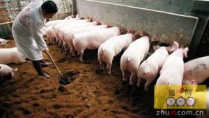 德国试验工厂将生猪粪肥转化成更多有用的产品