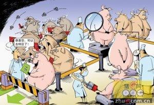 猪肉的利润到底去哪了?