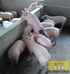 干货:涉及猪场管理的方方面面,太全了!